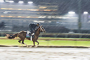 November 1-3, 2018: Breeders' Cup Horse Racing World Championships. Hi Happy