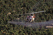 Crop dusting. Spraying orange orchards with pesticides at Cameo Ranch, Lancaster, California, USA.