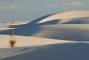 A lonely desert flower in the rippled gypsum, sand dunes in the White Sands National Monument, New Mexico, USA