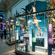 Exhibits in the Marine Animals hall at the Smithsonian National Museum of Natural History on the National Mall in Washington DC.