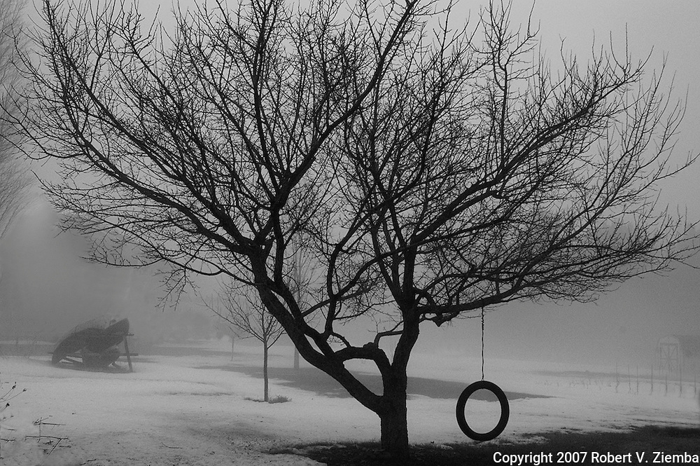A black and white image of a yard tree in the fog with a tire swing attached