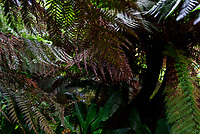 the Jungle at the Lost Gardens of Heligan photo by Mark Anton Smith