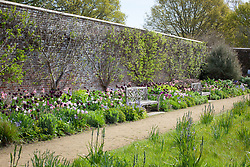 Border at Parham including Tulipa 'Groenland', 'Shirley', Queen of Night', 'Purple Dream', 'Spring Green' and bluebells