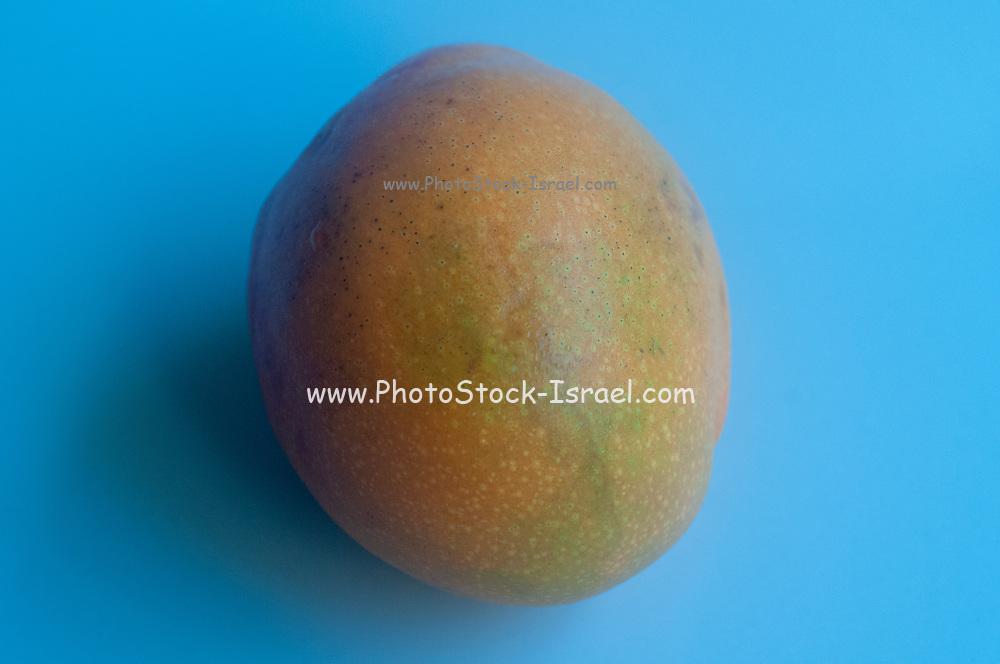 whole Fresh ripe mango on blue background