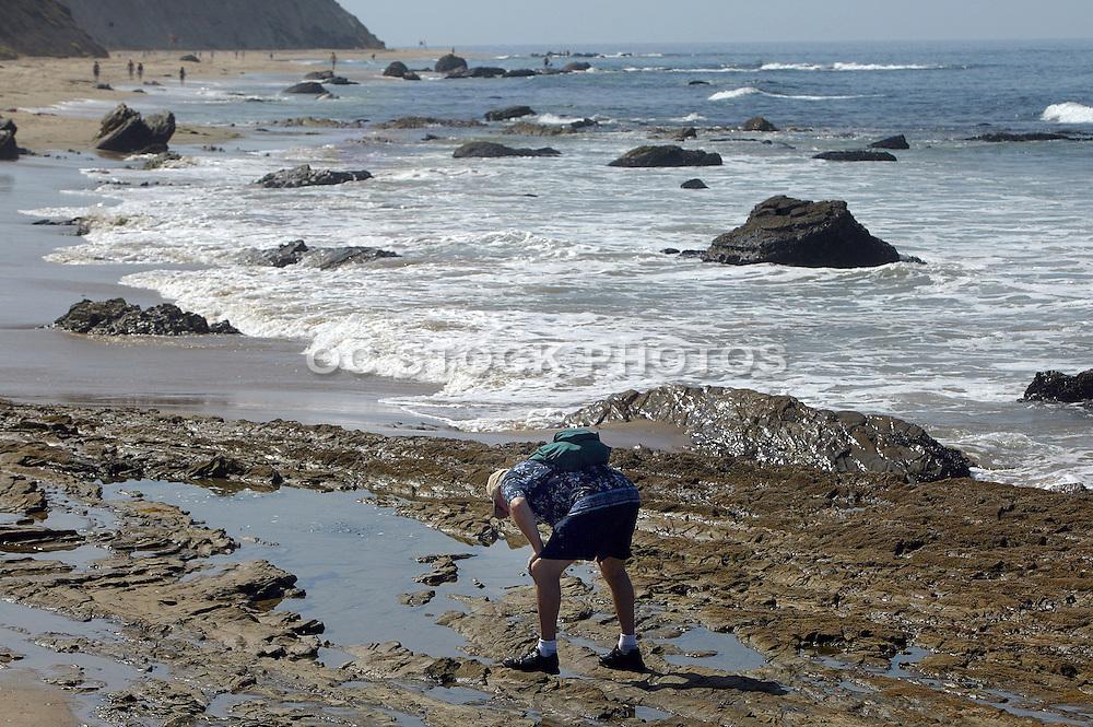 Man Looking At Sea Life In Laguna Beach