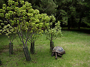 Plantation House, Jonathan, the 187-year-old tortoise, the world's oldest-recorded living land animal, who since the new year has had his own Twitter account (@Jonathan_onStH).<br /> <br /> Built in 1792 by the East India Company as a country residence for the Island's Governors. The tour comprises a viewing of the upstairs and downstairs rooms, followed by a visit to the grounds. It is also the home to St Helena's oldest inhabitant (and the world's oldest land creature) Jonathan the Tortoise. Here you will have the opportunity to visit Jonathan and friends up close.