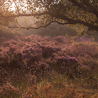 Another from Dunwich Heath at dawn on Saturday