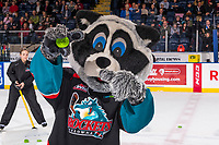 KELOWNA, CANADA - NOVEMBER 21:  Rocky Raccoon, the mascot of the Kelowna Rockets holds the winning puck of the Subway chuck a puck promotion on November 21, 2018 at Prospera Place in Kelowna, British Columbia, Canada.  (Photo by Marissa Baecker/Shoot the Breeze)