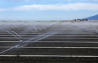 Irrigation of an agriculture field in Watsonville, California.