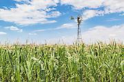 windmill in a field of green corn crop  near Allora, Queensland, Australia <br /> <br /> Editions:- Open Edition Print / Stock Image