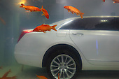Luxury Car Immerses In Fish Tank