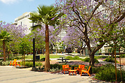 Campus Grounds Seating and Tables in the Quad Area at California State University Fullerton