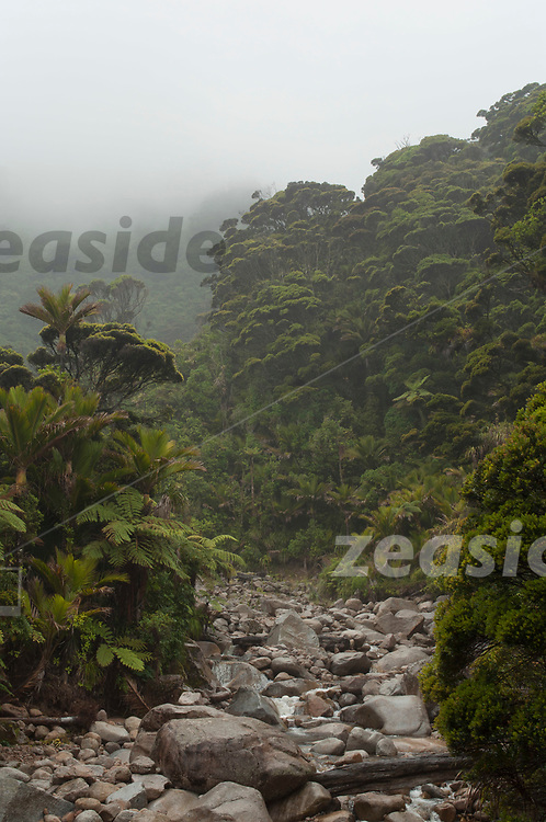Inside the coastal rainforest of the Kahurangi National Park on the north-western tip of New Zealands South Island, entrenched in ocean spray, drifting in from the west coast.