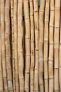 Vitoriano Veloso_MG, Brasil...Detalhe de bambu em Vitoriano Veloso (Bichinho)...The bamboo in Vitoriano Veloso (Bichinho)...Foto: LEO DRUMOND / NITRO