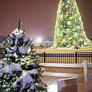 The White House Christmas tree at night with lights. In the Ellipse in front of the White House