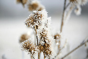 Ice covered hedgerows around Dales lodge, Kettering