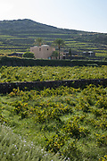 The Donnafugata Winery with terraced vineyards in the foreground and distance on the volcanic island of Pantelleria, Sicily, Italy.