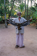 a man showing the wing span of his hawk India, Kerala, a state on the tropical coast of south west India