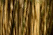 Bamboo, Bronx Zoo, New York