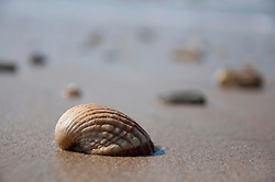 Close up of sea shell on beach near atlantic ocean