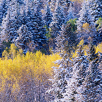 New snow drapes fall colors in the Gallatin Range, near Bozeman.