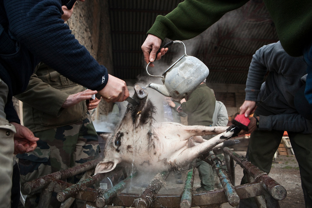The village's hunting association prepares a wild boar, to be shared among the club's members, in Barnave, Drôme valley, France.