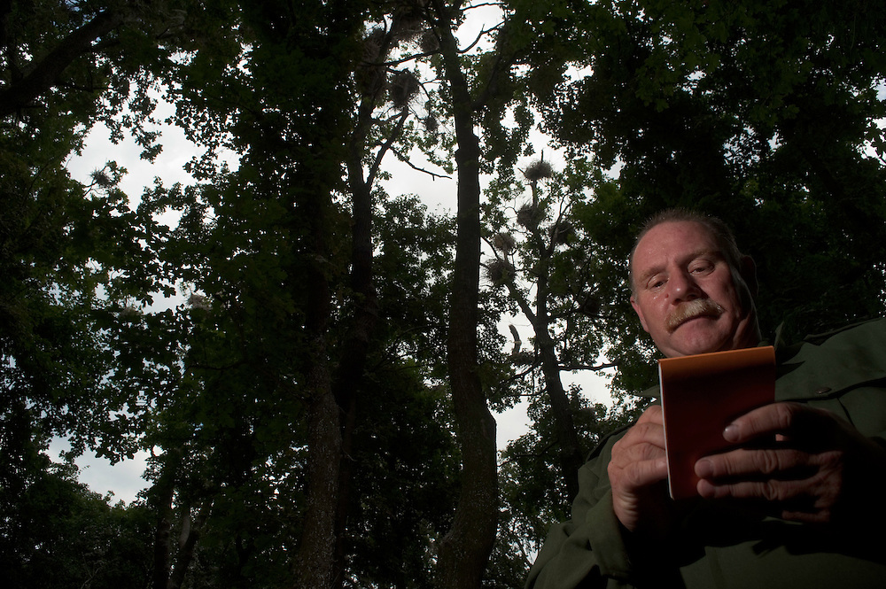 Warden counting the number of grey heron nest in durea Domnesca National Park in Moldova