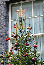 © Licensed to London News Pictures. 2/12/2018. London, UK. A giant Christmas tree with decorations installed at the entrance of No 10 Downing Street, the British Prime Minister Theresa May's residence in Westminster. Photo credit: Dinendra Haria/LNP