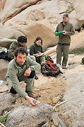 English-italien research team Giuseppe Sotgiu, Marco Favelli, Giulia Tessa, Dr. Trent Garner (from left to right) are taking samples in a pond in north Sardinia. Sardinia, Italy  Marco Favelli, Giulia Tessa, Dr. Trent Garner (von links nach rechts), Giuseppe Sotgiu (im Vordergrund) vom englisch-italienischen Forscherteam arbeiten in der Felslandschaft an der Nordspitze Sardiniens. In den Felstümpeln werden Kaulquappen und adulte Tiere des Sardischen Scheibenzünglers (Discoglossus sardus) gefangen. Giuseppe Sotgiu (im Vordergrund misst die Wassertemperatur in einem Felstümpel.