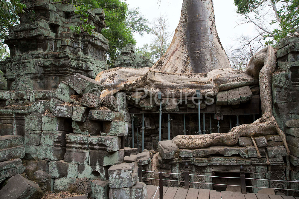 Silk-cotton tree routes grow around an ancient ruin of the Ta Prohm temple, known as the jungle temple,  in Angkor region Siem Reap Province, Cambodia, South East Asia. The building is supported with metal supports to prevent any further destruction.