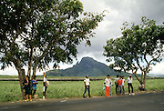 Local people by sugar cane plantation in Mauritius