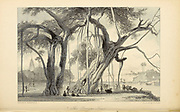 """A banyan, (banian), is a fig that begins its life as an epiphyte, i.e. a plant that grows on another plant, when its seed germinates in a crack or crevice of a host tree or edifice. """"Banyan"""" often specifically denominates Ficus benghalensis (the """"Indian banyan""""), which is the national tree of India, though the name has also been generalized to denominate all figs that share a common life cycle and used systematically in taxonomy to denominate the subgenus Urostigma. From the book ' The Oriental annual, or, Scenes in India ' by the Rev. Hobart Caunter Published by Edward Bull, London 1834 engravings from drawings by William Daniell"""