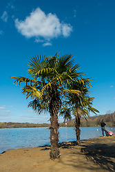 © Licensed to London News Pictures. 27/02/2021. LONDON, UK. Palm trees give a tropical feel as people on the beach enjoy the warm temperatures at Ruislip Lido in north west London on a sunny spring day.  Photo credit: Stephen Chung/LNP