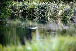 UK ENGLAND WILTSHIRE 26JUN08 - The river Kennet near Ramsbury in rural Wiltshire, western England...jre/Photo by Jiri Rezac..© Jiri Rezac 2008..Contact: +44 (0) 7050 110 417.Mobile:  +44 (0) 7801 337 683.Office:  +44 (0) 20 8968 9635..Email:   jiri@jirirezac.com.Web:     www.jirirezac.com..© All images Jiri Rezac 2008 - All rights reserved.