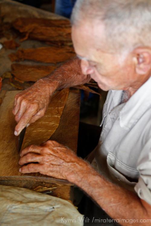 Cnetral America, Cuba, Pinar del Rio, San Luis. Cuban Cigar roller at Finca Robaina plantation.