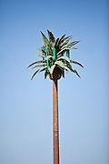 Mobile phone cell tower decorated like a palm tree Henderson, NV.