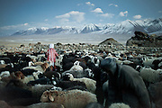 Looking for lambs and young goats in the herd..Ech Keli, Er Ali Boi's camp, one of the richest Kyrgyz in the Little Pamir..Trekking with yak caravan through the Little Pamir where the Afghan Kyrgyz community live all year, on the borders of China, Tajikistan and Pakistan.