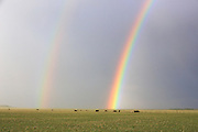 Rainbow near the Rocky Mountain Front, Montana.