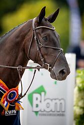 Blekkink Ester, NED, Jub<br /> KWPN Kampioenschappen - Ermelo 2018<br /> © Hippo Foto - Dirk Caremans<br /> 16/08/2018