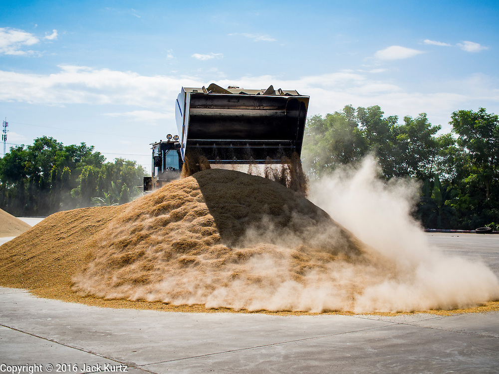 """23 NOVEMBER 2016 - AYUTTHAYA, THAILAND: A front end loader scoops up rice at a storage facility during the rice harvest in Ayutthaya province, north of Bangkok. Rice prices in Thailand hit a 13-month low early this month. The low prices are hurting farmers. Rice exports account for around 10 percent of Thailand's gross domestic product, and low prices frequently lead to discontent in the rural areas of Thailand. The military government has responded by sending soldiers to rice mills, to """"encourage"""" mill owners to pay farmers higher prices. The Thai army and navy are also buying for their kitchens directly from farmers in an effort to get more money into farmers' hands.  PHOTO BY JACK KURTZ"""
