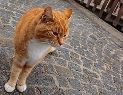 THEMENBILD - eine rote Katze in den Gassen von Hallstatt, aufgenommen am 31. März 2018, Hallstatt, Österreich // a red cat in the streets of Hallstatt on 2018/03/31, Hallstatt, Austria. EXPA Pictures © 2018, PhotoCredit: EXPA/ Stefanie Oberhauser