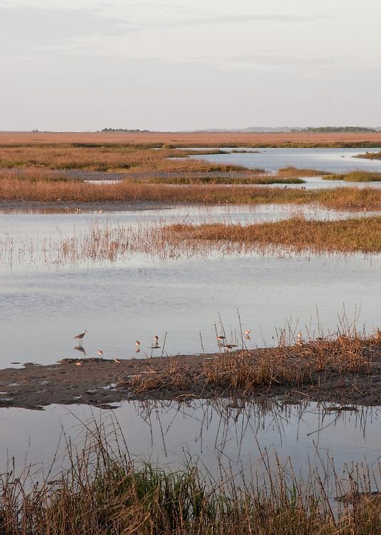Tidal Marshland