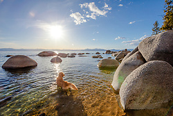 """""""Dog at Lake Tahoe 1"""" - Photograph of a Golden Retrieve wading in the water at Lake Tahoe, just before sunset."""