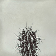 Monochrome minimalistic still of a potted cactus plant<br /> <br /> Redbubble products: http://rdbl.co/2uKYFWf<br /> Society6 products: http://bit.ly/2wifJlV