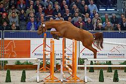 035, NN<br /> KWPN Stallionshow - 's Hertogenbosch 2018<br /> © Hippo Foto - Dirk Caremans<br /> 31/01/2018