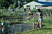 Woman watering her plot in a community garden.