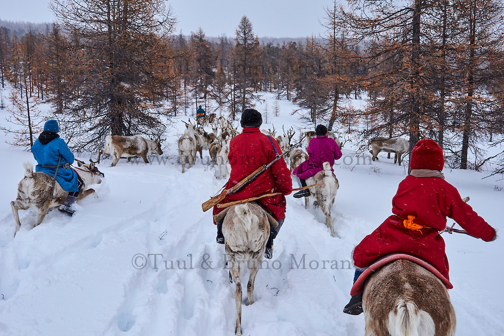 Mongolie, province de Khovsgol, les Tsaatans, éleveurs de rennes, transhumance hivernale // Mongolia, Khovsgol province, the Tsaatan, reindeer herder, winter migration