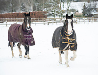 horses in the snow Stratton Audley Oxfordshire photo by Brian Jordan 24th jan 2021