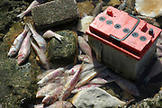 Israel, Mediterranean sea, Dead fish and a car battery on the shore
