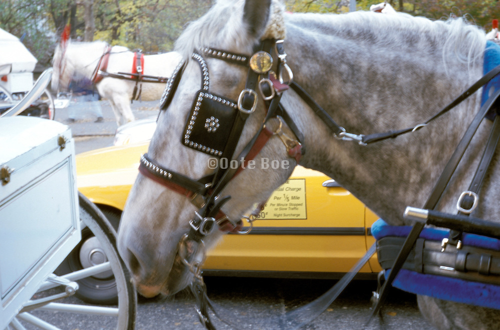 Horse with blinders and a cab moving through Central Park New York NY US.